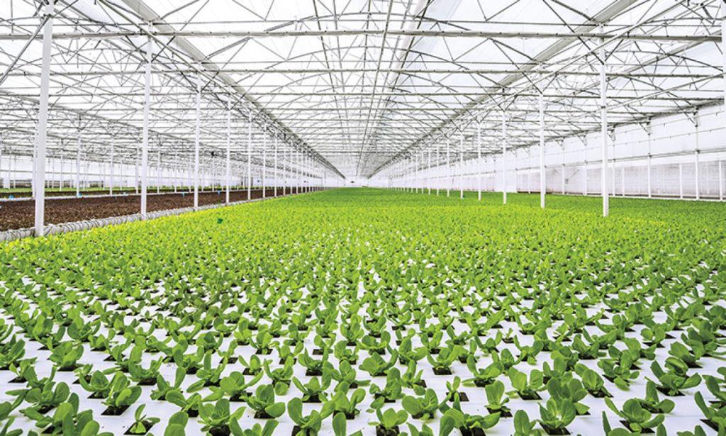 bajas temperaturas afectan cultivos