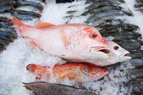 SADER garantiza abasto de pescados y mariscos para Semana Santa
