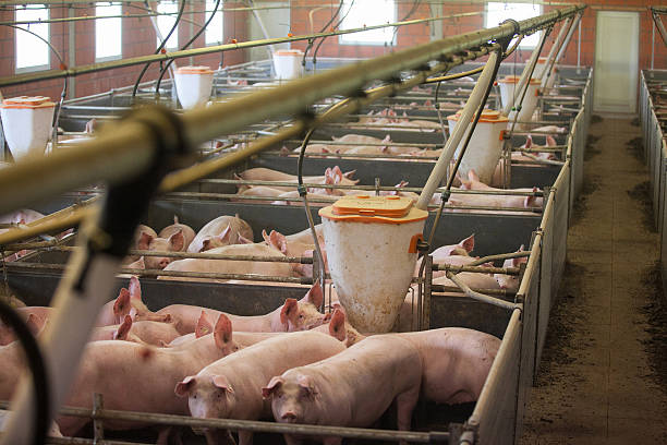 México en proceso de erradicar tuberculosis bovina para mantener exportación