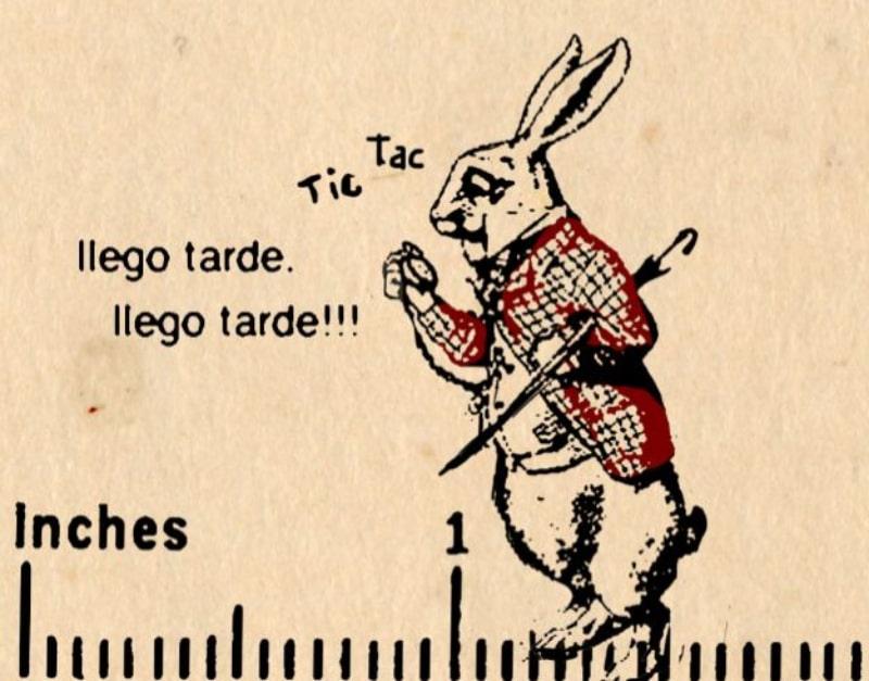 percepcion del tiempo, conejo