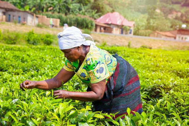 SADER: Más del 30% de beneficiarias de Producción para Bienestar son mujeres