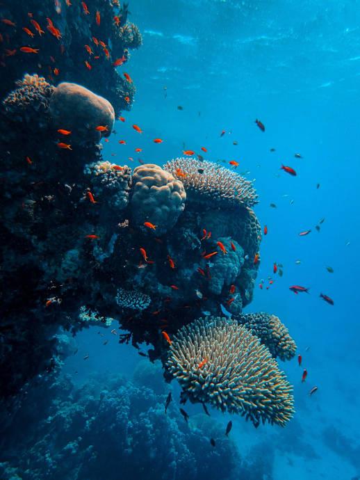 Arrecifes del coral